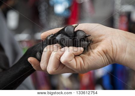 Woman's Hand Holding French Bulldog's Paw