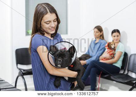 Girl Looking French Bulldog Wearing Cone In Clinic