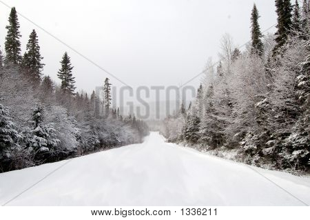 Snow Fresh On A Backroad