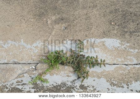 Two plants struggling to grow through a cracked line on cement floor - struggle concept, perseverance, survival, opportunity, challenge, competition, motivation, hope of life, strength, endurance
