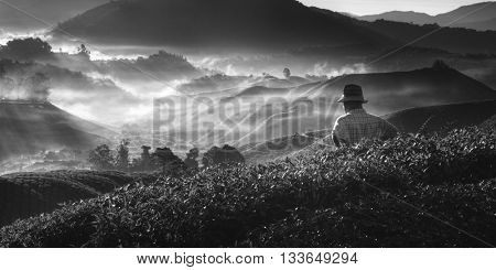 Tea Mountain Nature Plantation Tradition Culture Concept