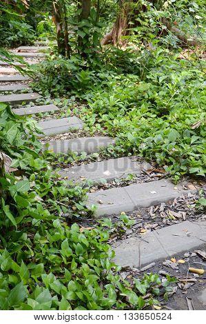 close up path in nature garden thailand