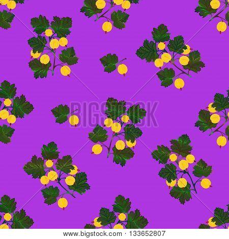 Colored gooseberries seamless pattern. Vector gooseberry vintage background. Seamless pattern with colored hand draw graphic gooseberries. Vector yellow berries template.