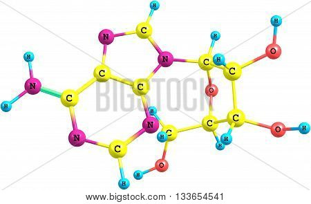 Adenosine is a purine nucleoside composed of a molecule of adenine attached to a ribose sugar molecule moiety. 3d illustration