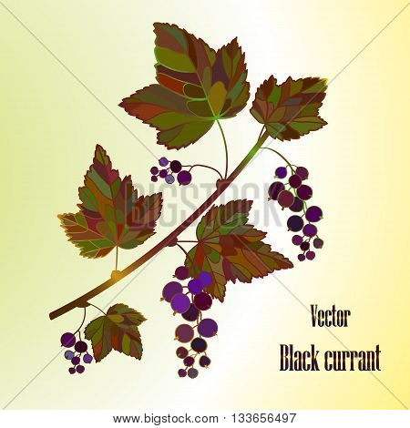 Black currant composition, currant Leaves, currant Vector, berry illustration of Currant branch. Currant Isolated.