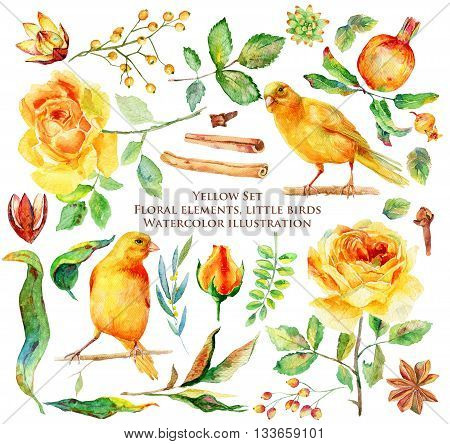 Yellow set of different flowers, leaves and birds for design. Watercolor roses canaries berries pomegranate anise cinnamon branches and twigs. Set of floral elements to create compositions.