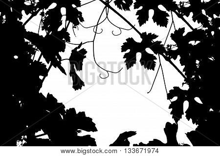 Frame silhouette of grape branches - the trace of the vineyard