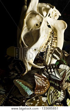 Deer Skull and Butterflies on black background