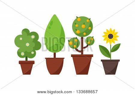 Home bush plant in pot culture on white background and set of indoor home plant and tree in pots. Home pot plant and tree plants with flowers and leaves. Botany gardening flower home plant and tree.