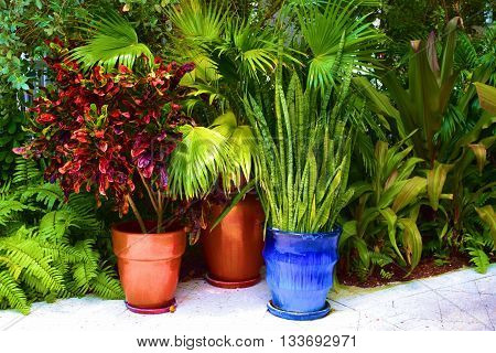 Colorful potted tropical plants taken in a outdoor garden