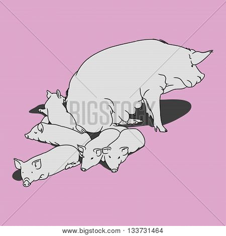 Graphic image of a pig and her piglets. Outline drawing of a pig on a pink and gray background. Vector illustration emblem