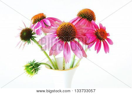 A cluster of echinacea flowers at different stages of development in a gold-rimmed vase isolated on white. Echinacea flowers more commonly known as Cone Flowers are a common medicinal herb for stimulating the immune system.