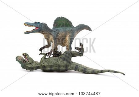 spinosaurus stands and tyrannosaurus lays down on a white background