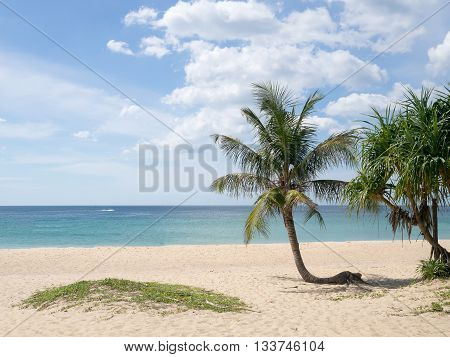 Summer time on beach. Green coconut tree on a white sand beach at Kata beach Phuket Thailand.