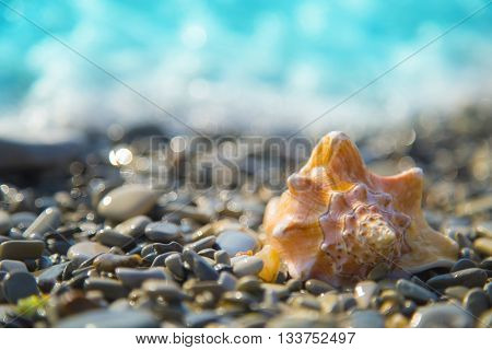 Beauty conch shell on the pebble beach