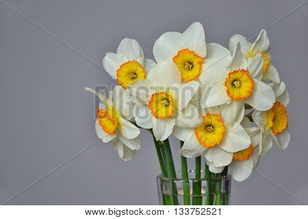 Narcissus Spring Flowers Bouquet Yellow White 2