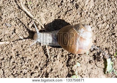 Snail On Dirt
