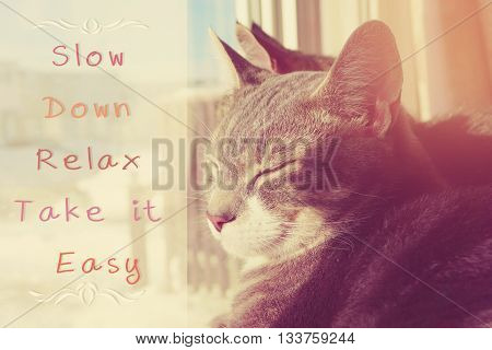 Slow Down Relax Take it Easy, motivational quote