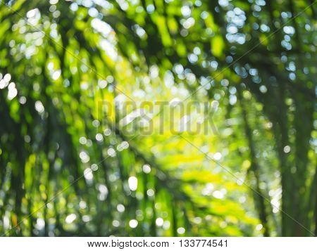 Bright green blurred background from green foliage and sunlight green blurred wallpaper