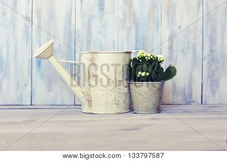 Photo of white kalanchoe flower and watering can