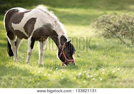 portrait of cute horse in red halter