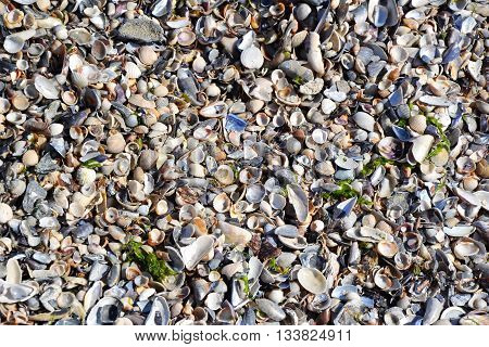 Sea Shells Sand Beach Tiny Shells In The Waves 2