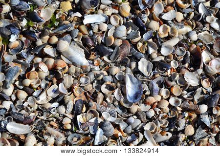 Sea Shells Sand Beach Tiny Shells In The Waves 3