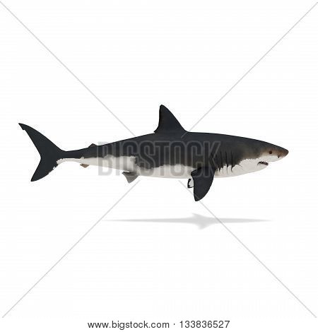 Side view of shark isolated on white 3d rendering