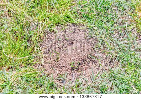 Anthill closeup. Photographed on a sunny day on a lawn of a public urban park