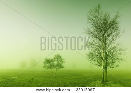 Some trees in mysterious green morning light