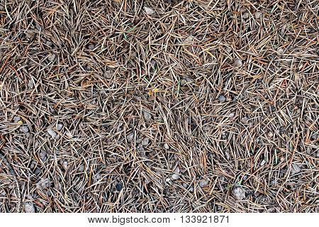 tiny needles on the clay surface - texture or background