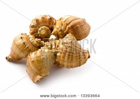 object on white - seashell close up poster