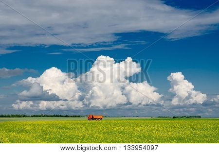 Blooming yellow rapeseed field against blue sky with clouds Belarus