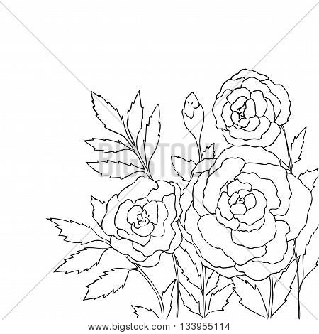 Beautiful roses isolated on white background. Hand drawn vector illustration with flowers. Retro floral card. Romantic delicate bouquet. Element for design. Contour lines and strokes. Coloring page.