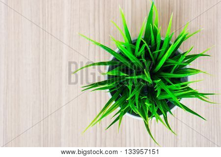 Green organic wheat grass against on wood floor top view