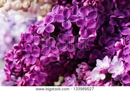 Lilac flowers close up. Bunch of purple flowers