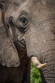 Close-up of elephant head in bright sunshine poster