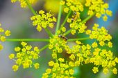 Ant on a yellow flower in spring poster