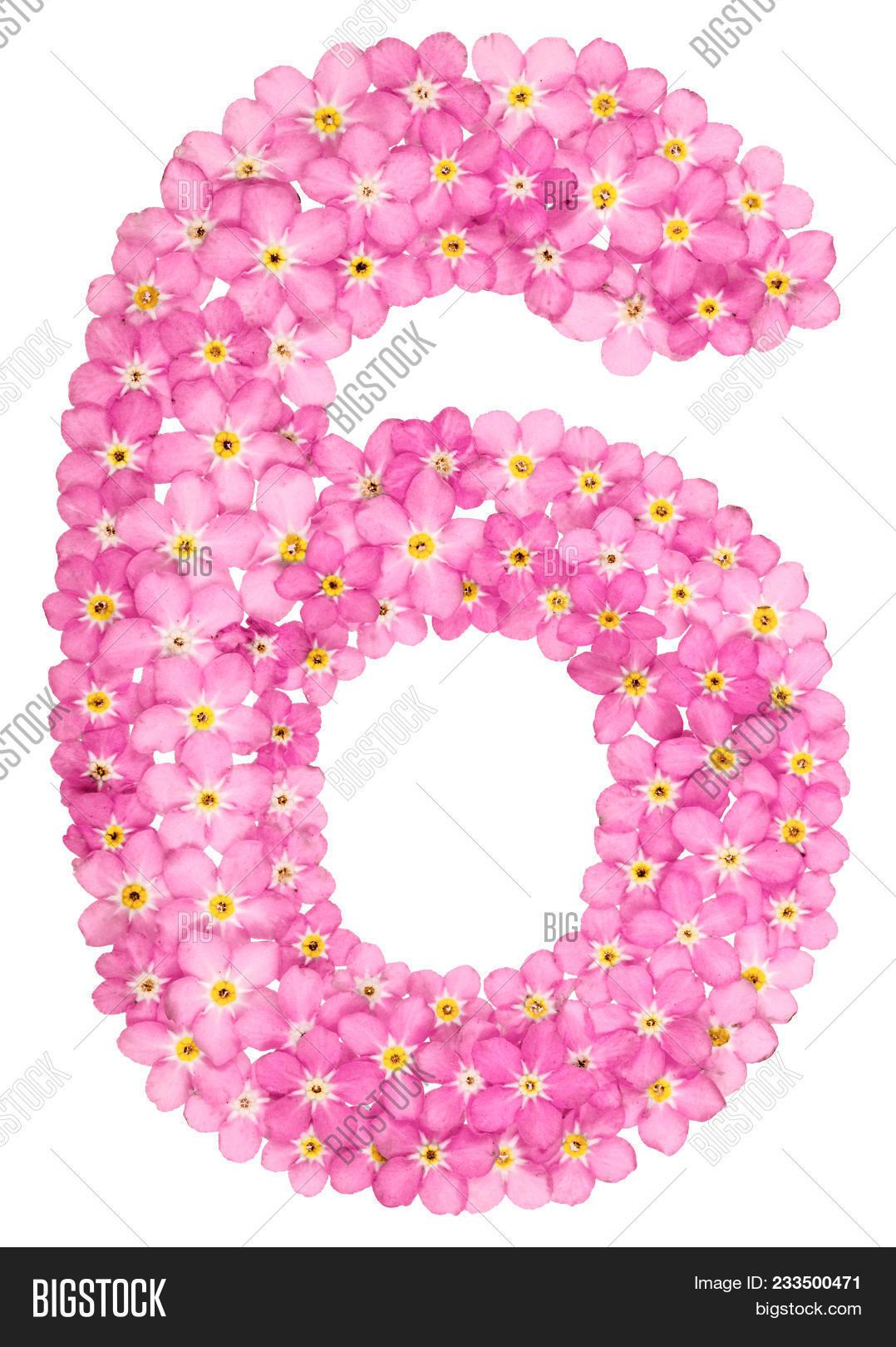 Arabic Numeral 6 Six Image Photo Free Trial Bigstock