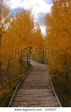 Follow The Yellow Aspen Path