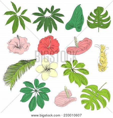 Vector Hand Drawn Tropical Plants And Flowers Set.