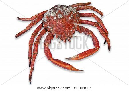 Wonderful Red Cooked Crab