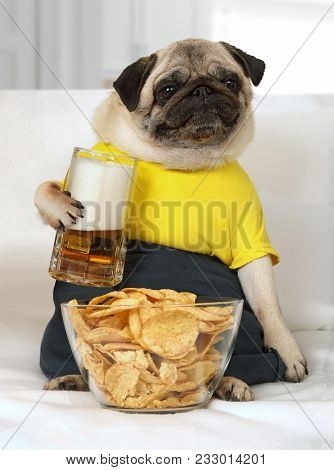 Humorous Photo Of A Pug Dog Lying On The Couch With A Glass Of Beer And Chips