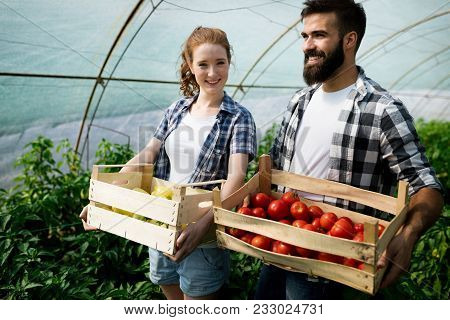 Young Happy Couple Of Farmers Working In Greenhouse