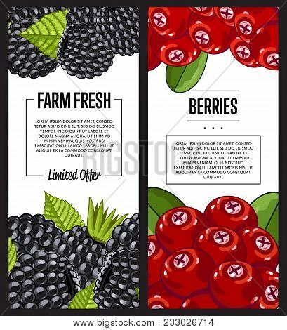 Organic Farm Flyer With Cranberry And Blackberry Vector Illustration. Natural Juicy Fruit Poster, Or