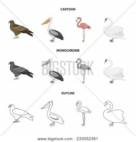 Kite, Pelican, Flamingo, Swan. Birds Set Collection Icons In Cartoon, Outline, Monochrome Style Vect