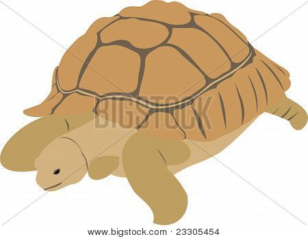 The big turtle