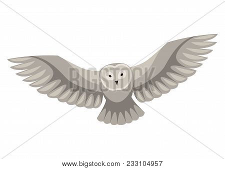 Stylized Illustration Of Owl. Woodland Forest Animal On White Background.