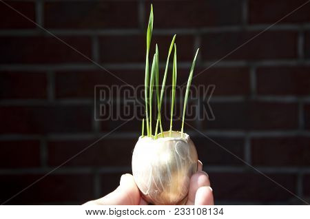 Spring, Easter Decoration, Savings Gold Fund. Seedling, Cultivated Sprout And World Agriculture. Lux