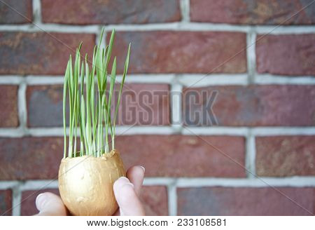 Growing A Plant, Gardening And Environmental Protection. Seedling, Cultivated Sprout And World Agric